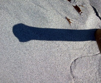 Shadow from a kelp stipe