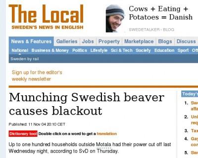 Swedish beaver