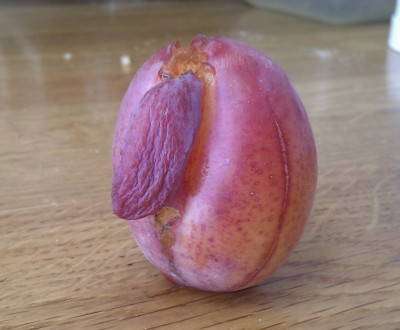 Nice plums