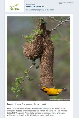 Weaver bird nest shaped like a penis