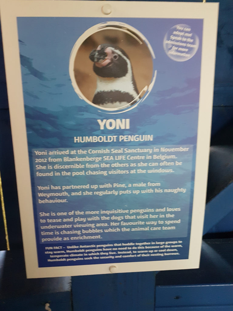 A penguin called Yoni